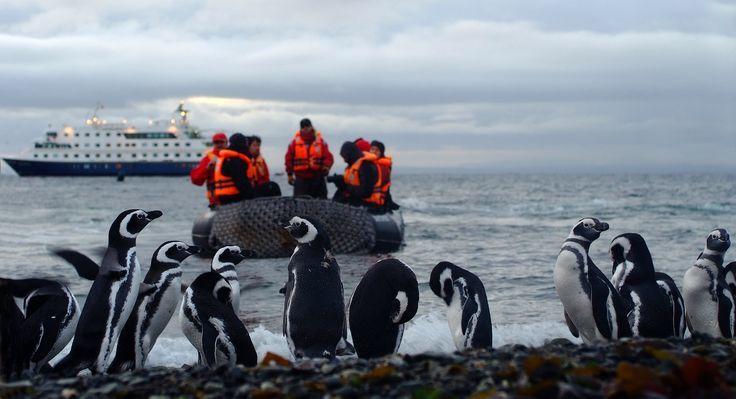 Crucero y Pingüinos