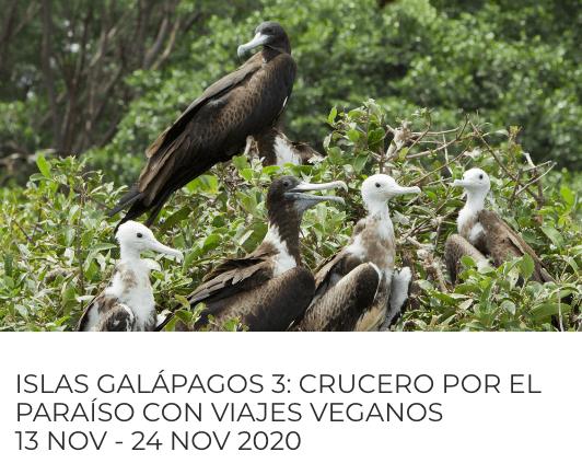 crucero vegano galápagos
