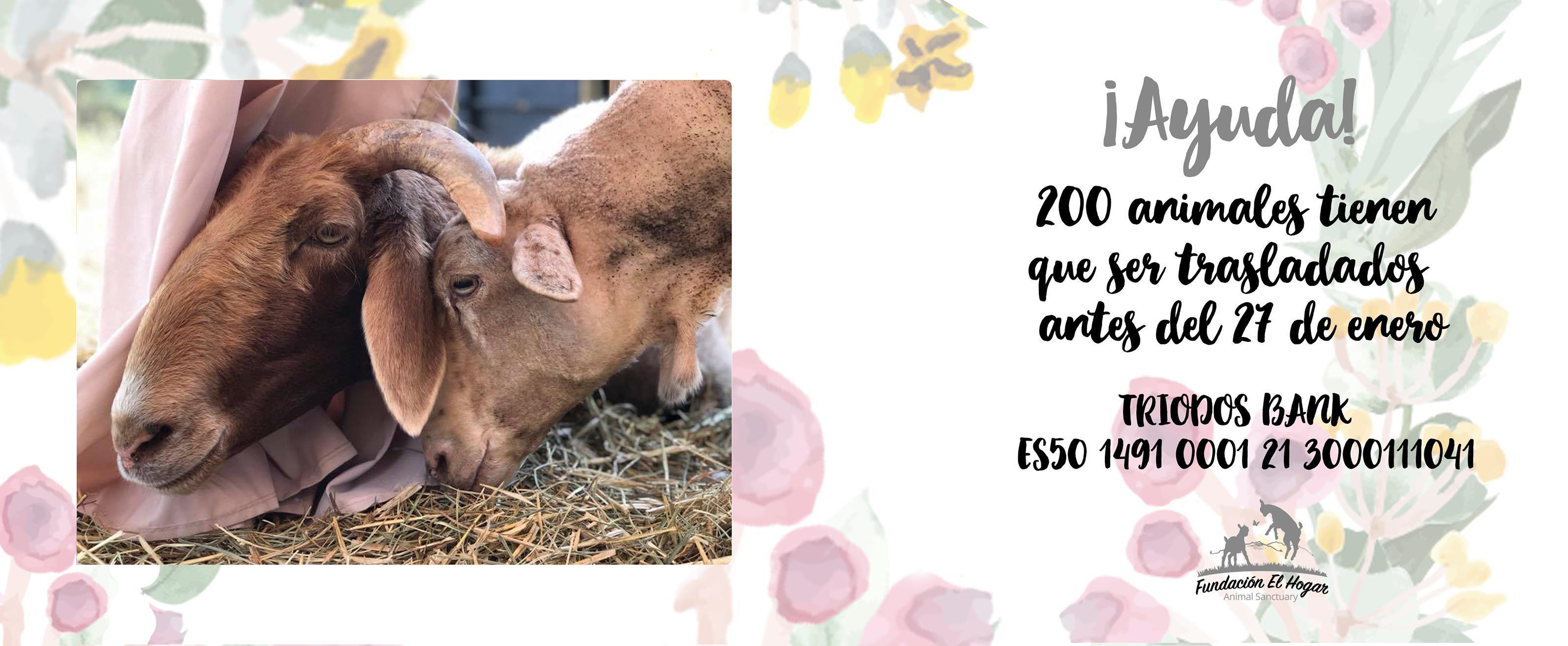 donativos el hogar animal sanctuary
