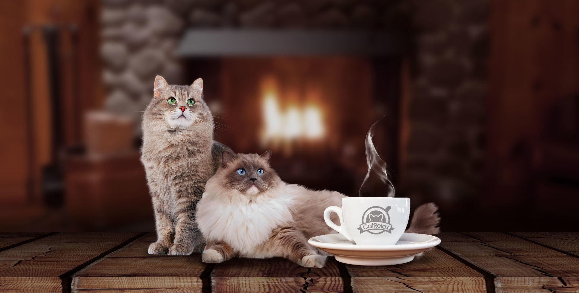 cat relax alicante