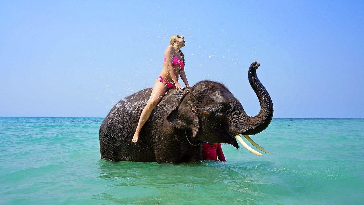 santuario elefantes