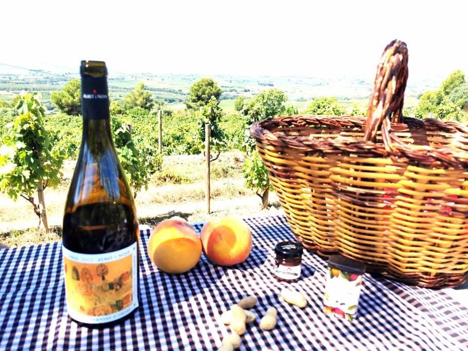 Picnic albet i noya con vino El Fanio